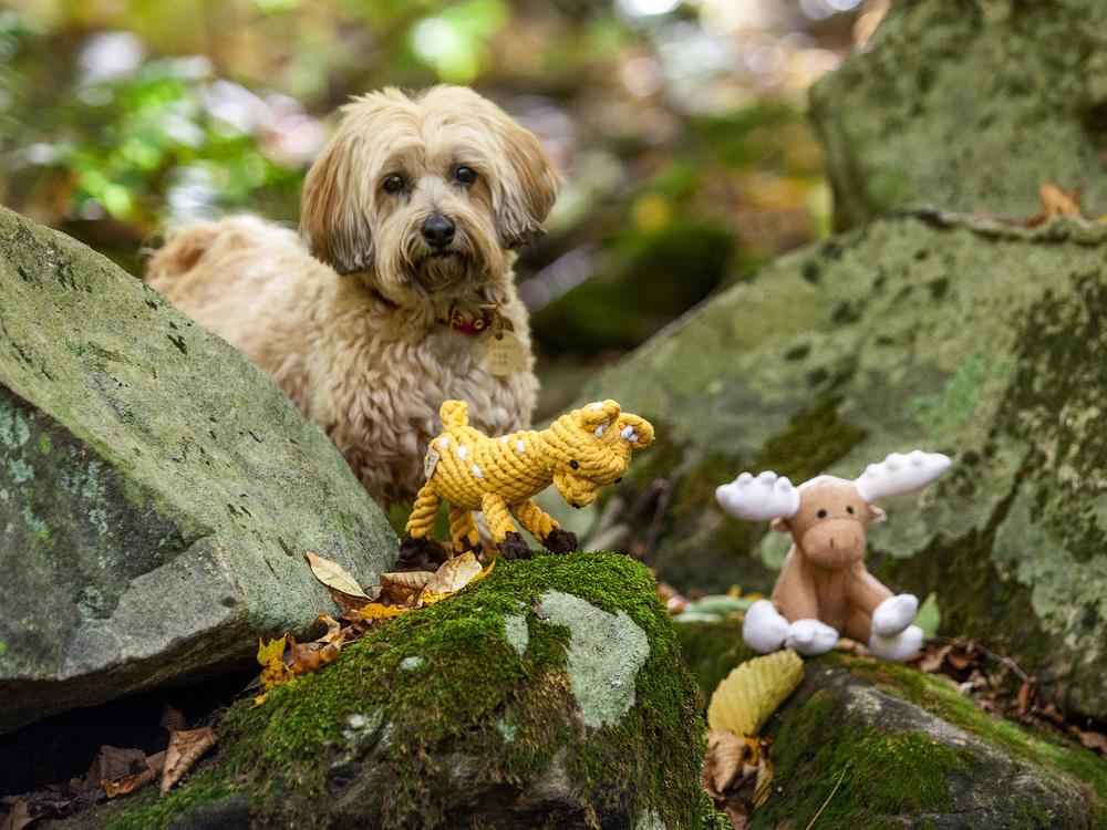 JAX and BONES | Daphne the Deer Rope Toy + White Moose Woolie Toy