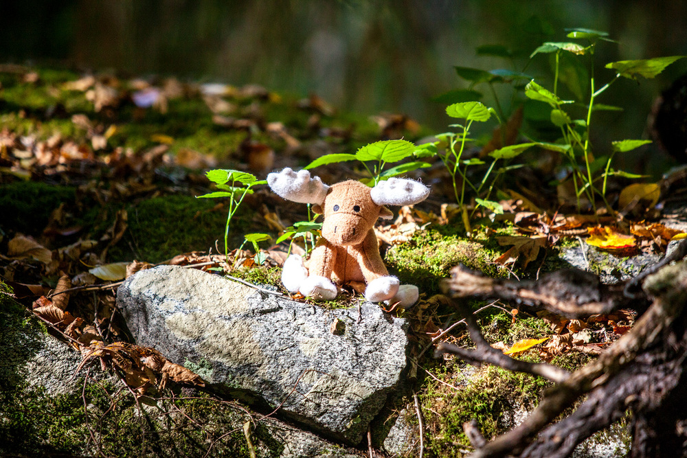JAX and BONES |White Moose Woolie Toy