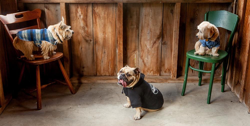 BILLY WOLF | Cassidy Coat + PETHAUS | Bones Dog Hoodie + DOG & CO. | Denim Button Up Shirt
