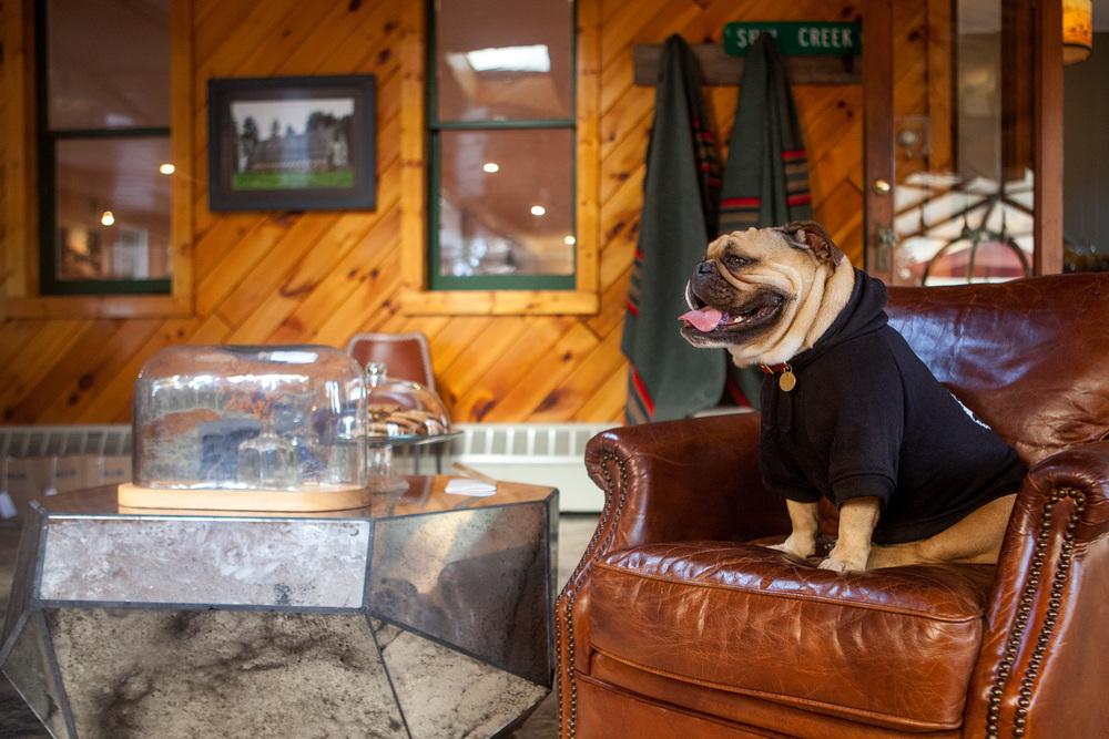 Addie in the PETHAUS | Bones Dog Hoodie