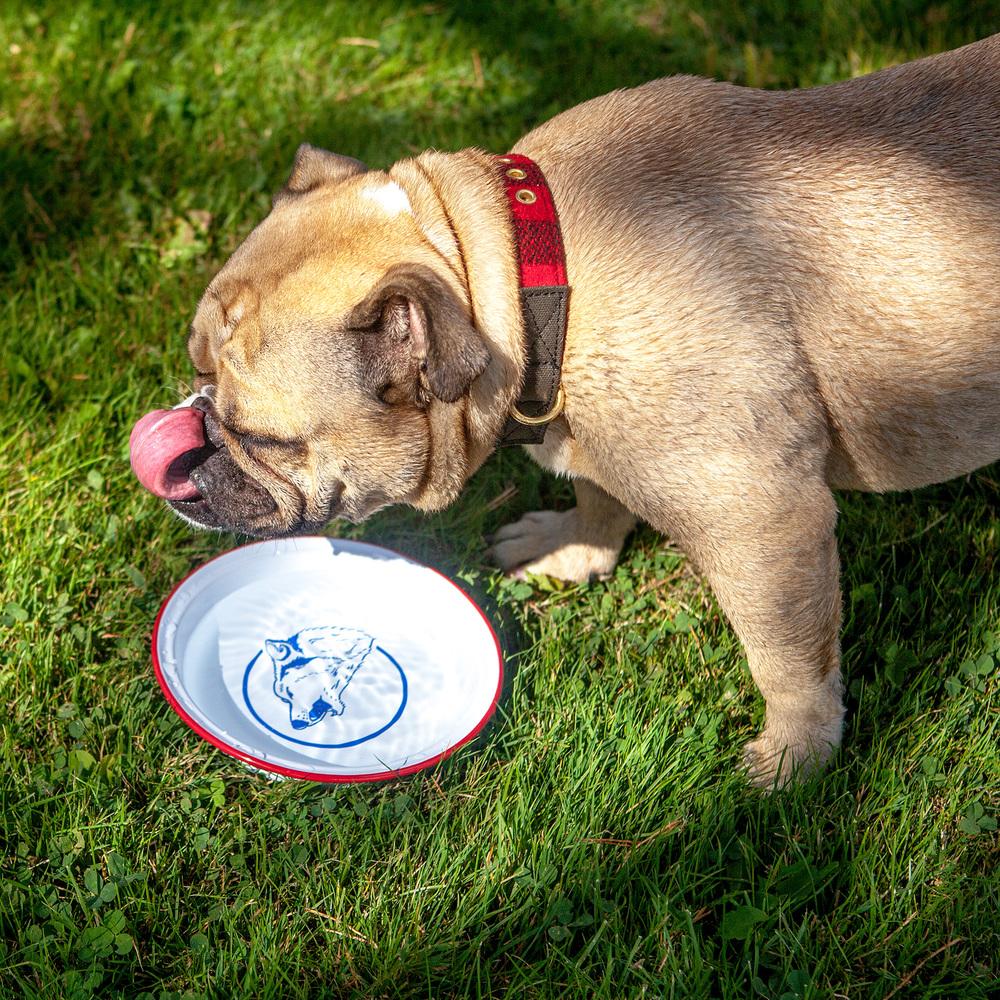 Addie & the BILLY WOLF | Dog Dish