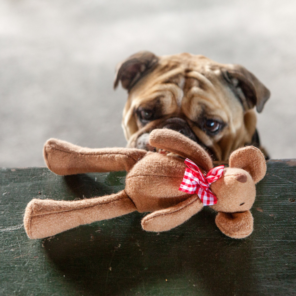 Addie & the JAX and BONES | Country Mouse Woolie Toy
