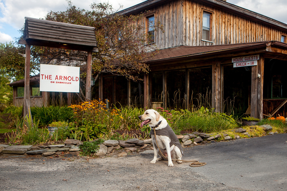 DOG & CO. | The Arnold House