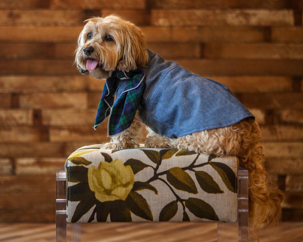 DOG & CO. | Denim Button Up Shirt + BILLY WOLF | McCadden Bandana