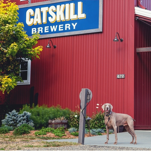 DOG of the CATSKILLS BREWERY