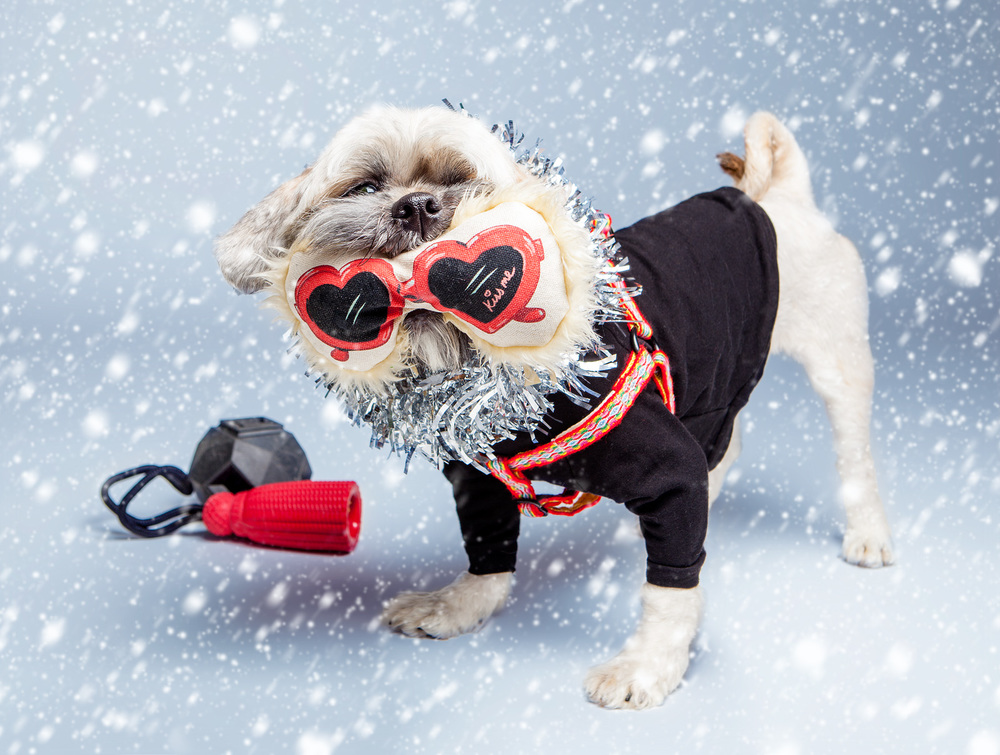HARRY BARKER | Heart Glasses Toy  +  ALLKU PETS | Harness in Red  +  DOG & CO. | Little Black TShirt