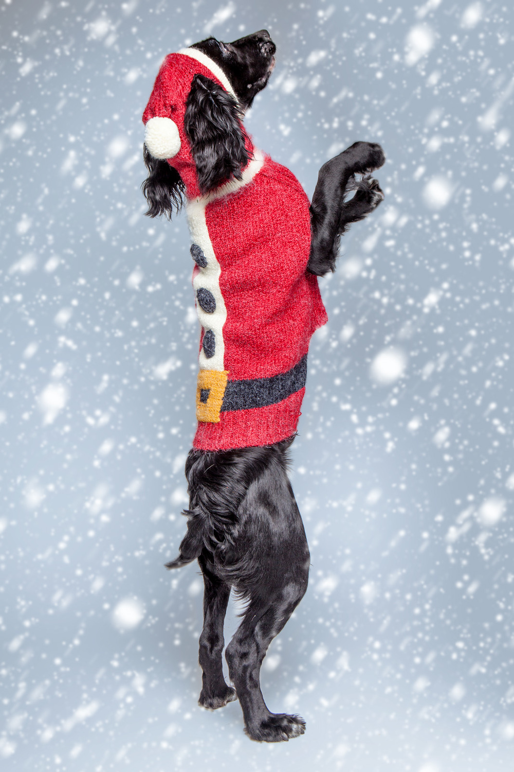 DOG & CO. | Santa Paws Sweater