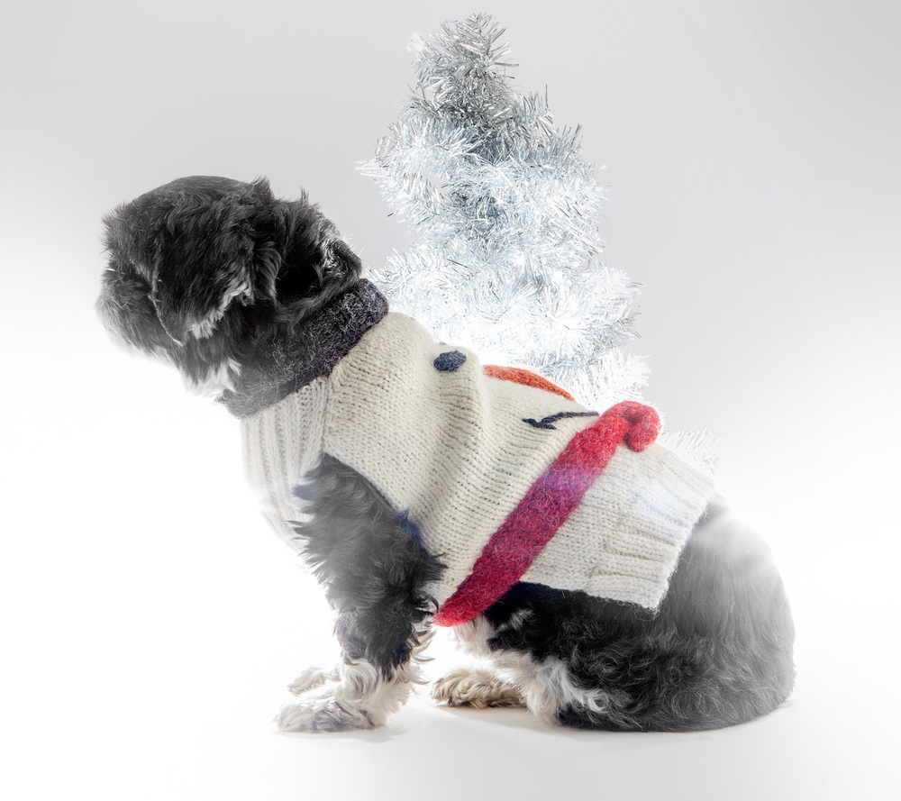 DOG & CO. | Snow Mutt Sweater