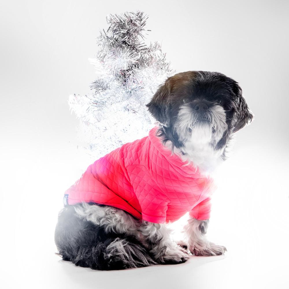 DOG & CO. | Bon Chien Hoodie