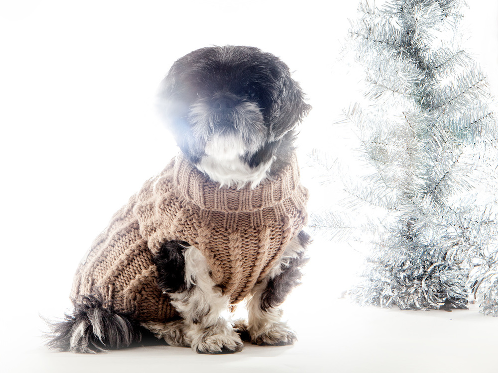 MAX-BONE | Madeline Roll Neck Jumper