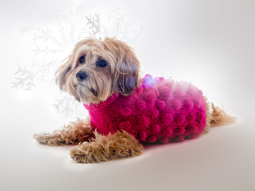 WARE of the DOG | Bobble Sweater