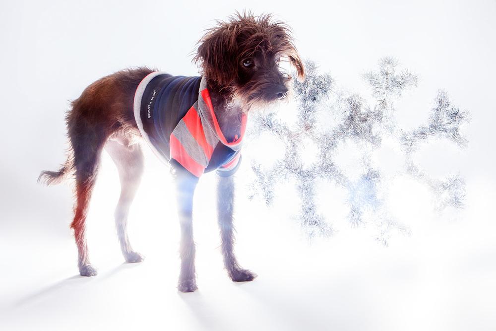 DOG & CO. | Winter Wonder