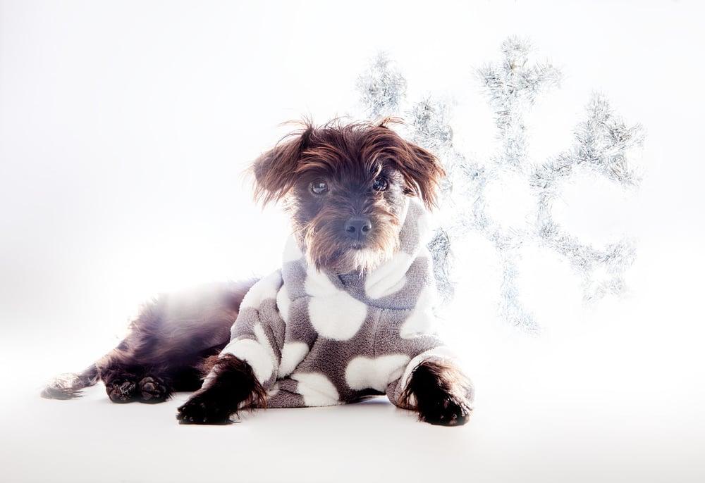 DOG & CO. | Soft + Fuzzy Hoodie