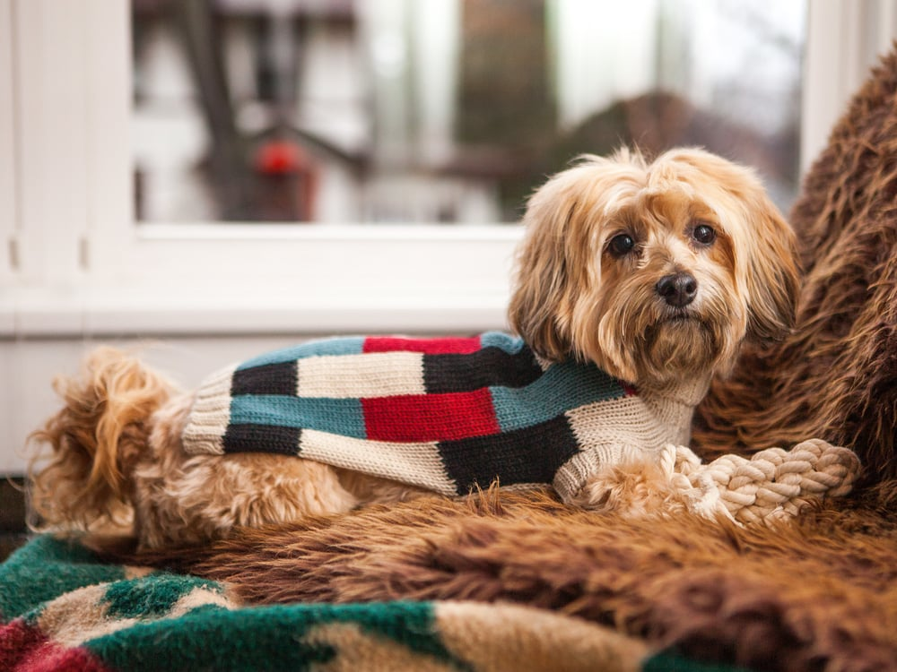 DUSEN DUSEN | Vertical Bricks Dog Sweater + THE KNOT HOUSE | Fish Toy in Natural