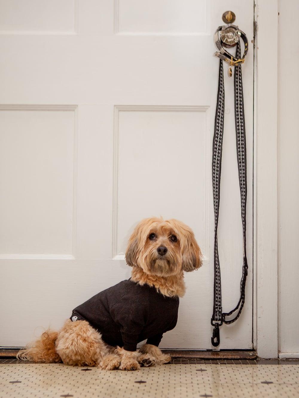 DOG & CO. | Little Black T-Shirt + ALLKU PET | Leash in Black
