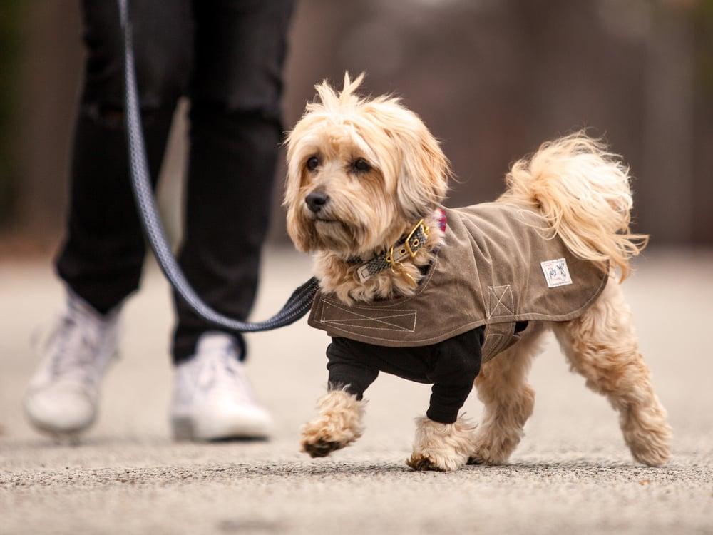 ALLKU PET | Leah in Black + DOG & CO. | Little Black T-Shirt + BILLY WOLF | Wyatt Waterproof Coat