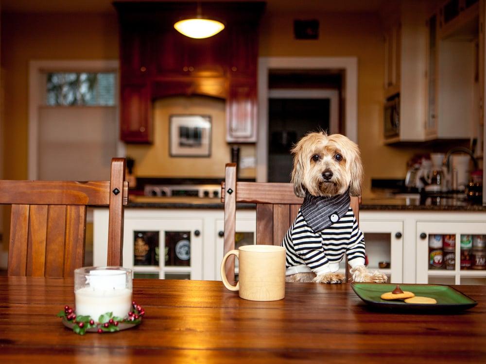 DOG & CO. | Cheeky Striped Pullover + Denim Bandana
