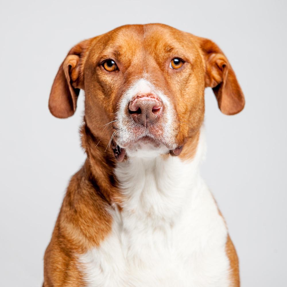 DOG & CO.| Shop + Adopt
