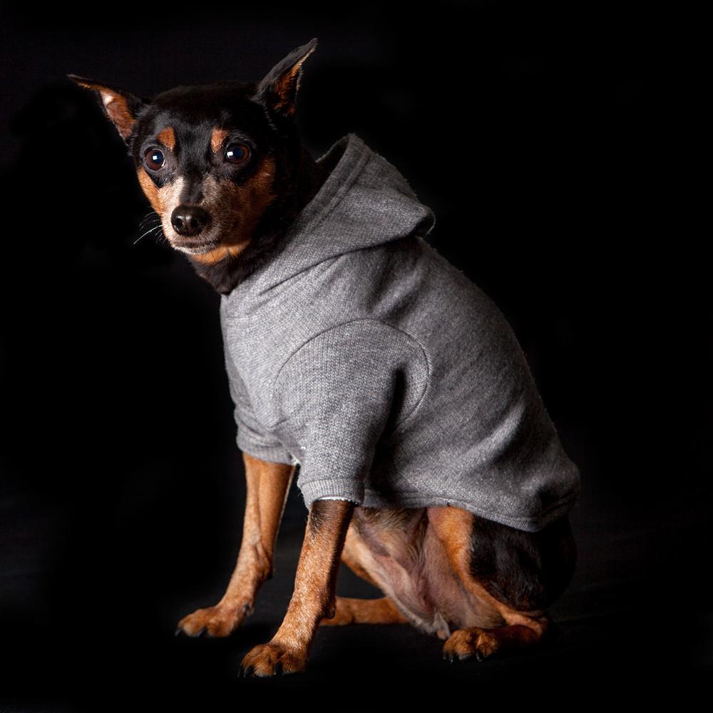 DOG & CO. | #CanineCool