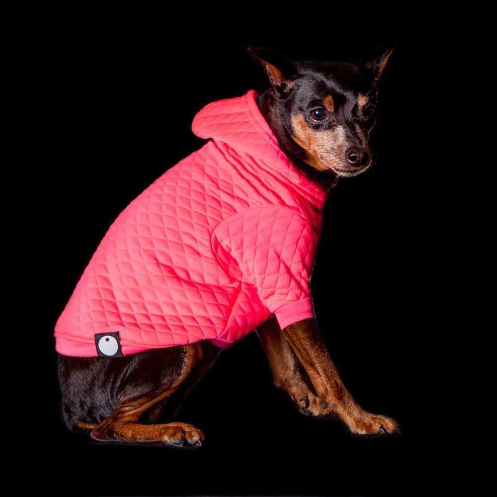 DOG & CO. | Bon Chien Hoodie in Neon Pink