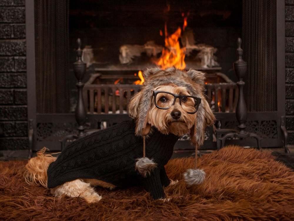 DOG & CO. | Hibernating at Home
