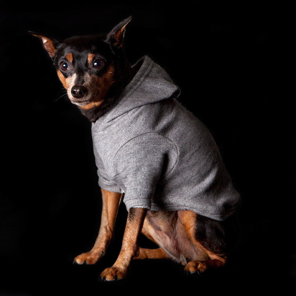 DOG & CO. | Bon Chien Hoodie in Grey French Terry