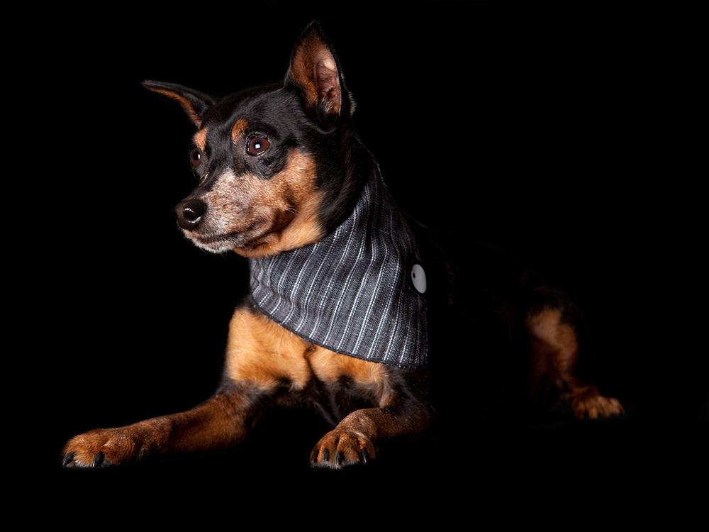 DOG & CO. | Denim Bandana in Coal