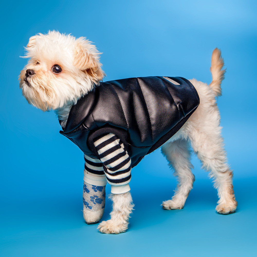 HUTS and BAY | Padded Leather Vest over the DOG & CO. | Cheeky Striped Pullover