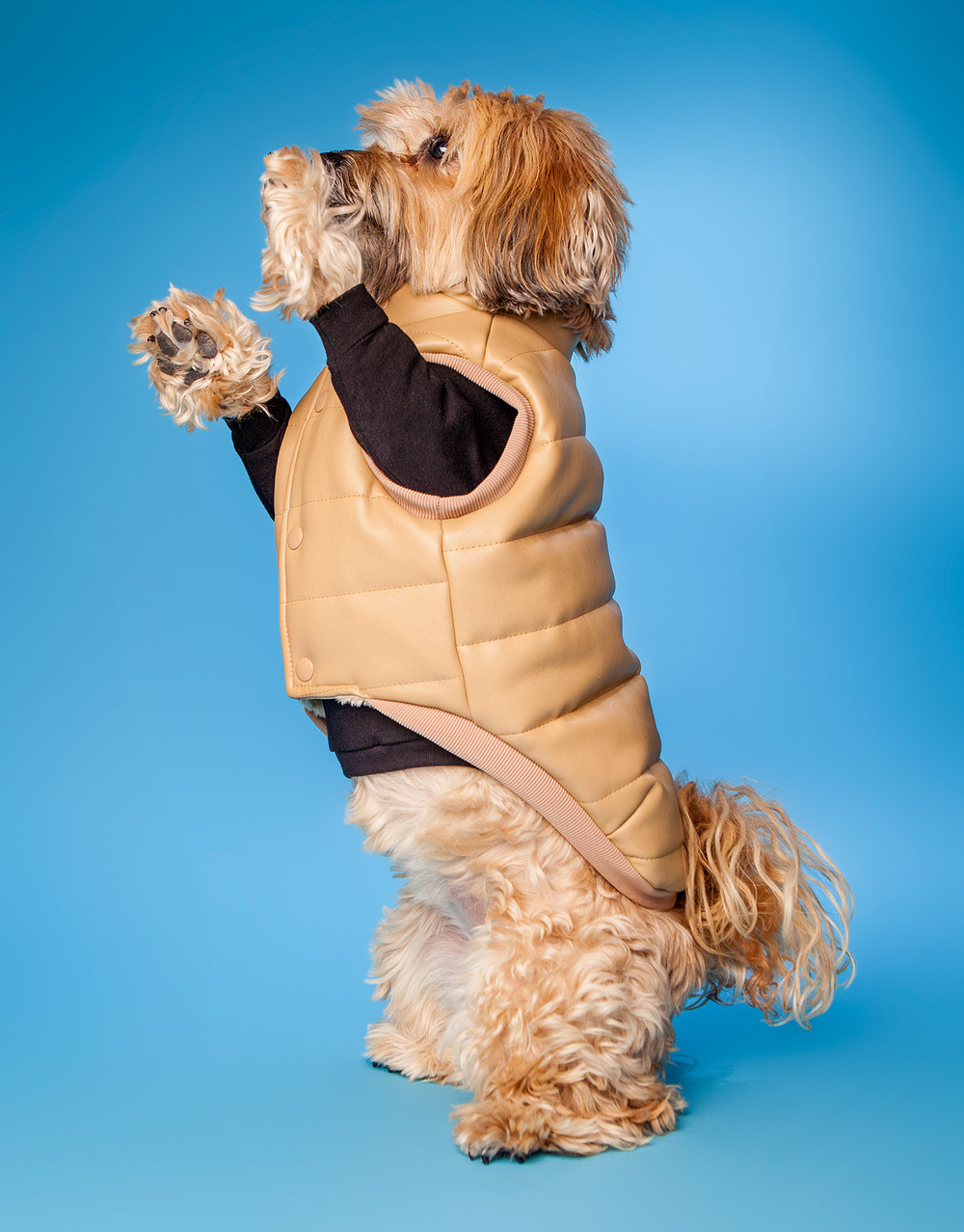 HUTS and BAY | Padded Leather Vest in Camelover the DOG & CO. | Little Black TShirt