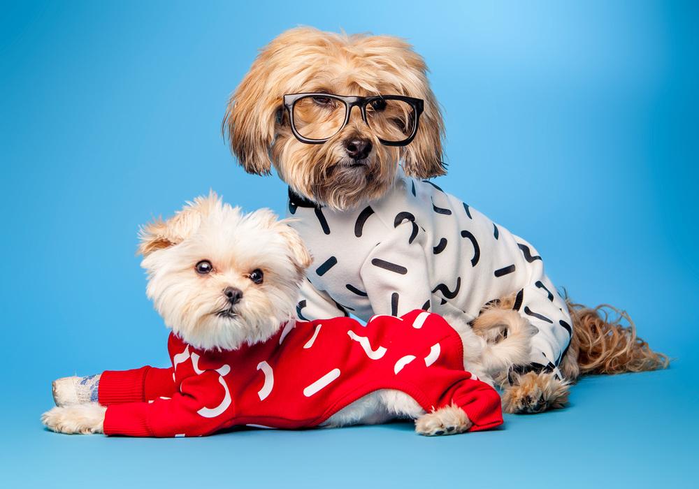 DOG & CO. | Brighten Up