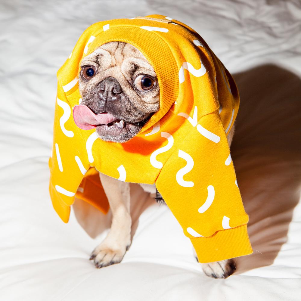 DOG & CO. | Doug the Pug