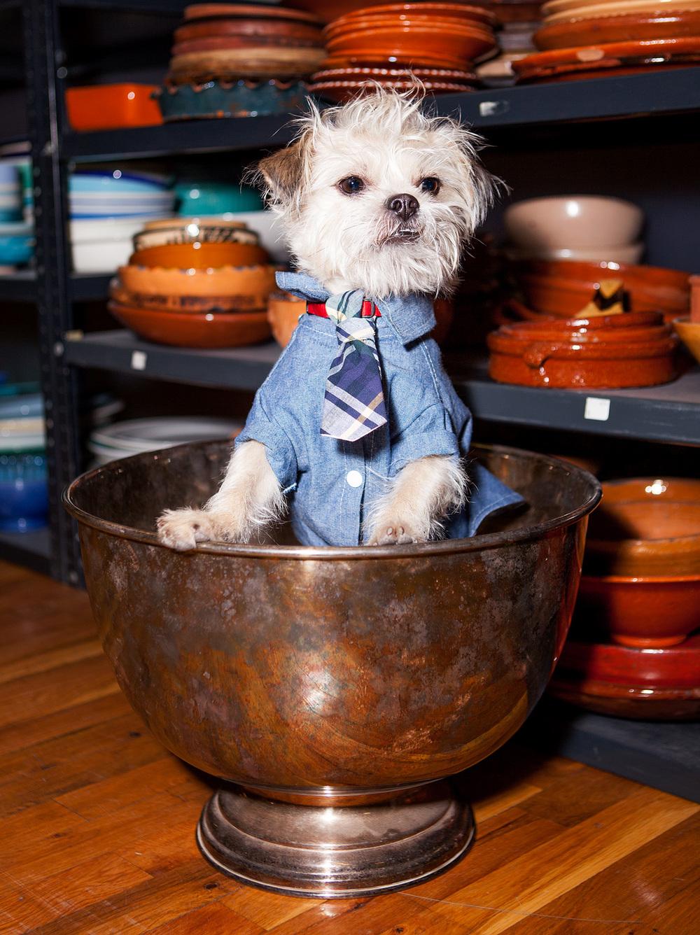 DOG & CO. | Button Up Denim Shirt
