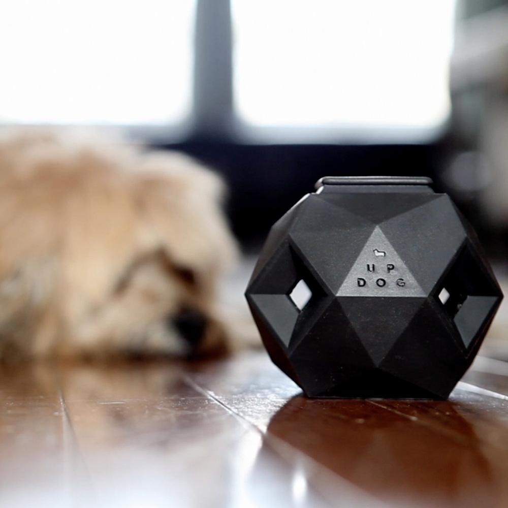 DOG & CO. | Cheeky the Dog vs The Odin
