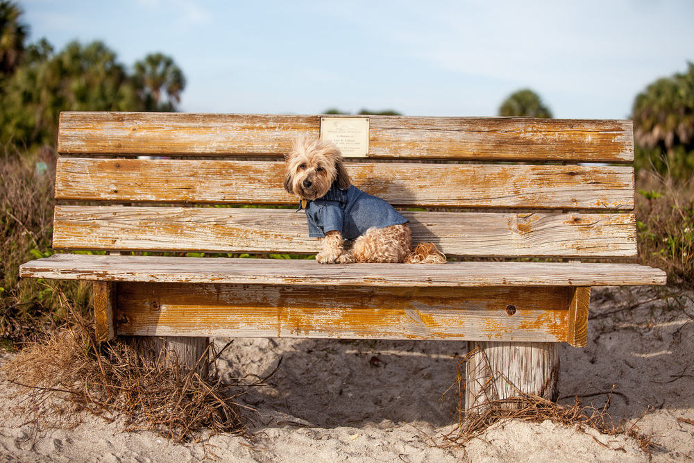 DOG & CO. | Denim Button Up