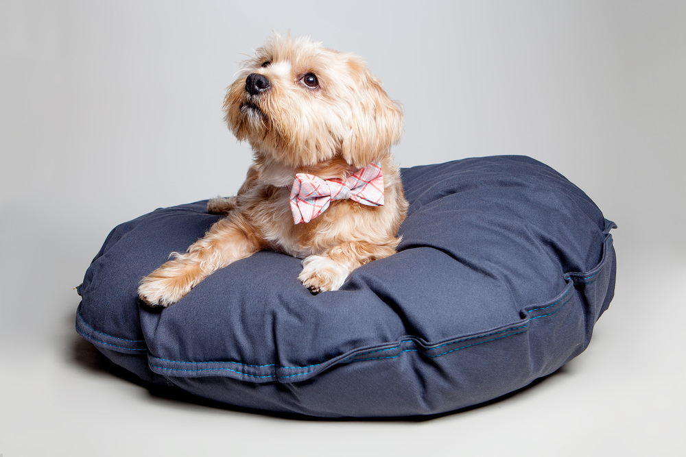 SPOOKS (now known as MOOSE) on the DEN DOG BED | Dog Bed in Steel  +  TRAX | Retro Plaid Bow Tie Collar