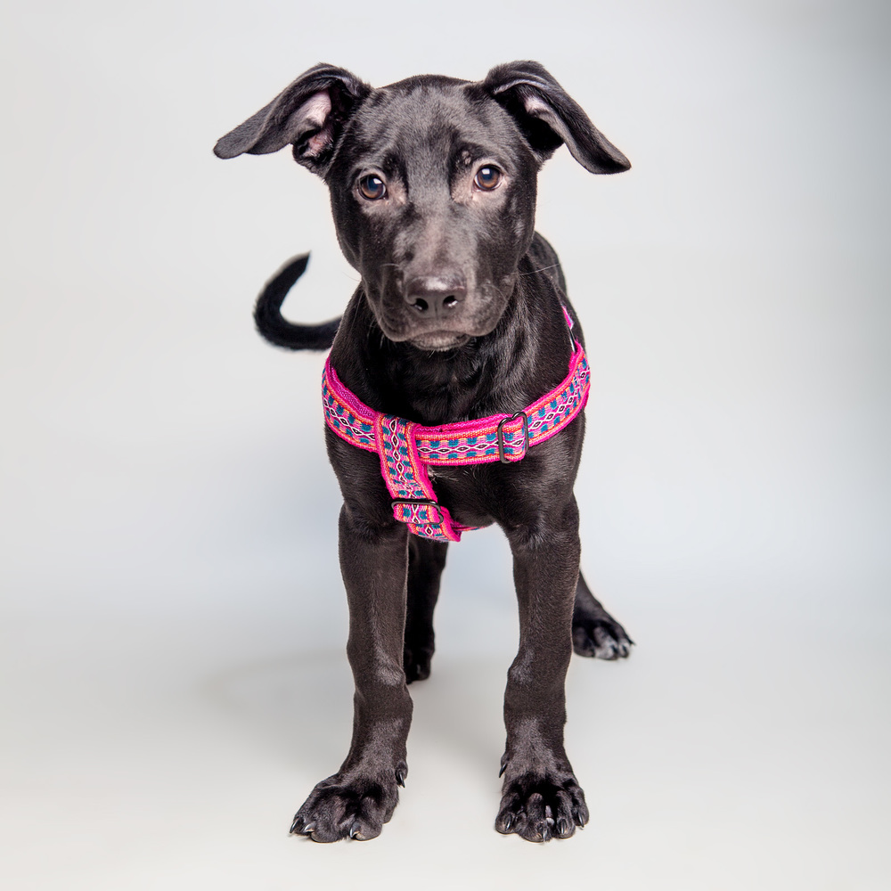 BAILEY in the ALLKU PETS | Harness in Pink