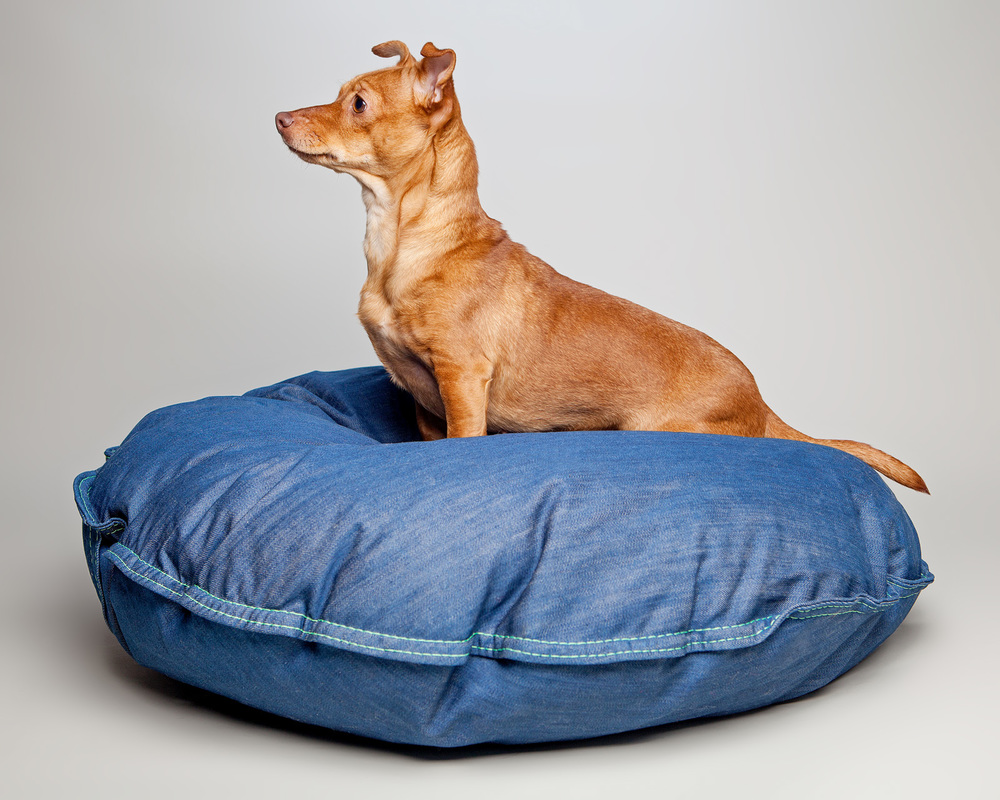 CRICKET in the DEN DOG BEDS | Bed in Whistle Blue Denim