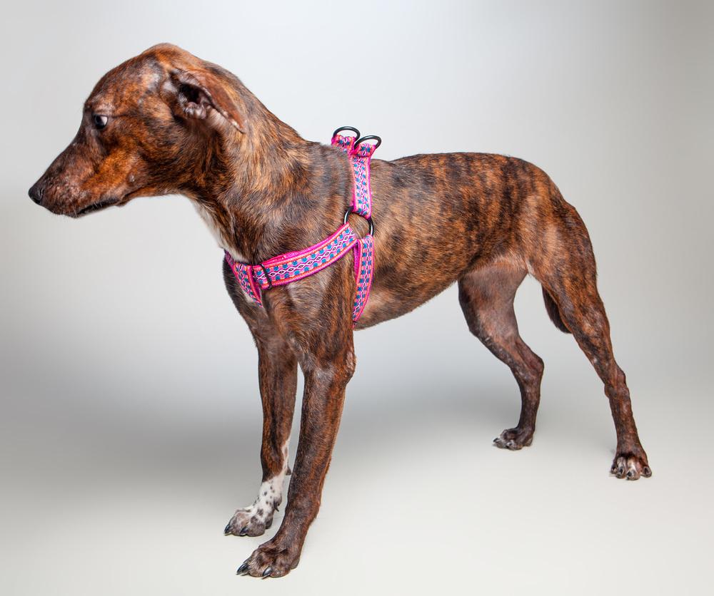 ALLKU PETS | Harness in Pink