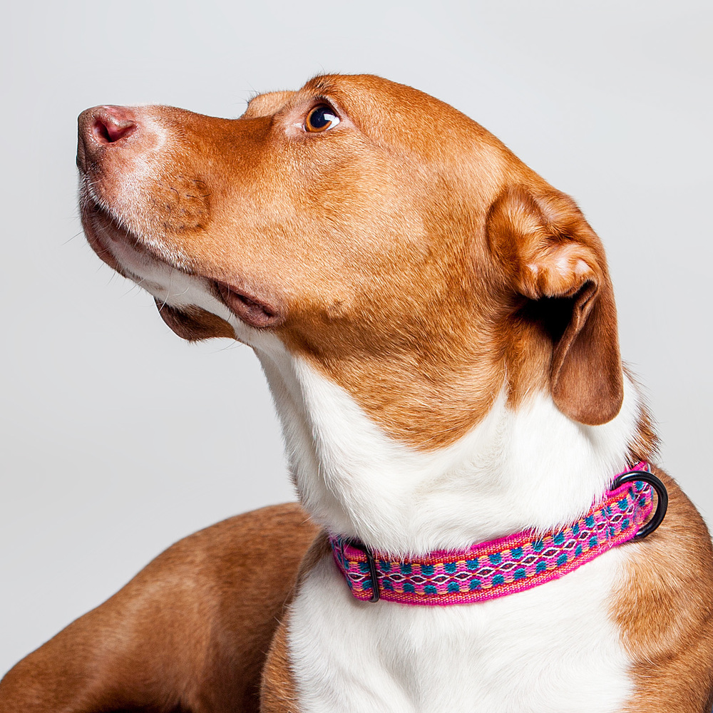 ABBY in the ALLKU PETS | Collar in Pink