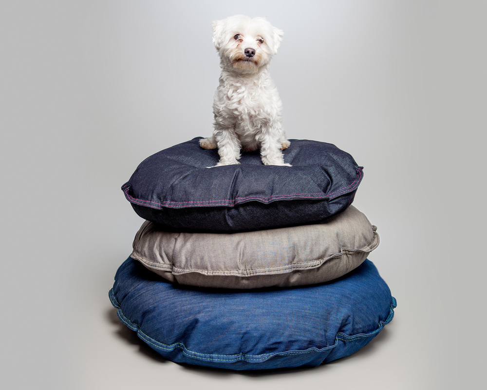 TEDDY on the DEN DOG BEDS | Beds in Dark Denim, Sand Grey, and Whistle Blue Denim