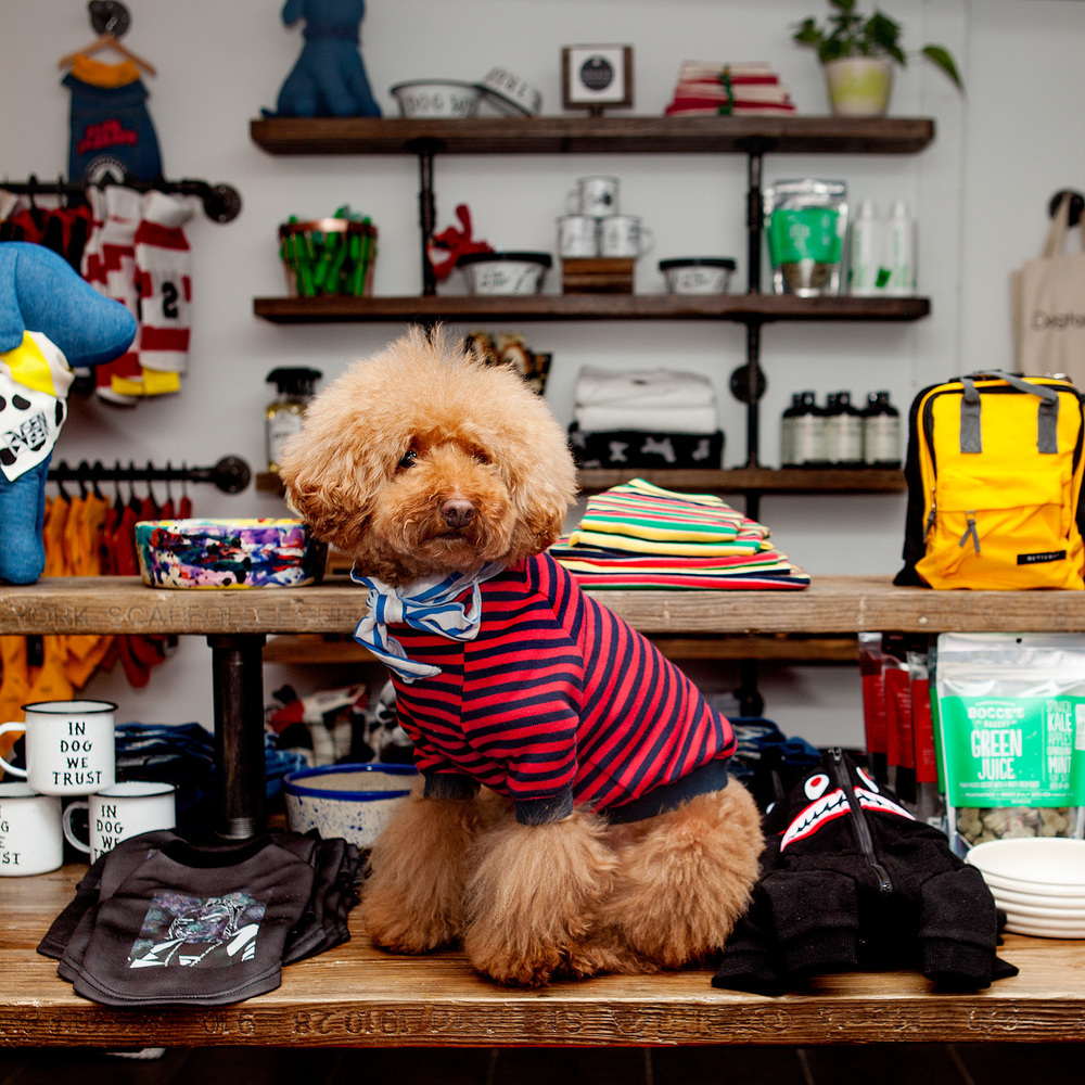 DOG & CO. Pup-Up Shop