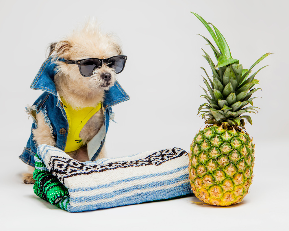 PETHAUS | Raw Denim Jacket  +  LITTLE COLLIN | Tropical Tank in Lime Yellow  +  ROSIE BUNNY BEAN | Serape & Sherpa Blanket