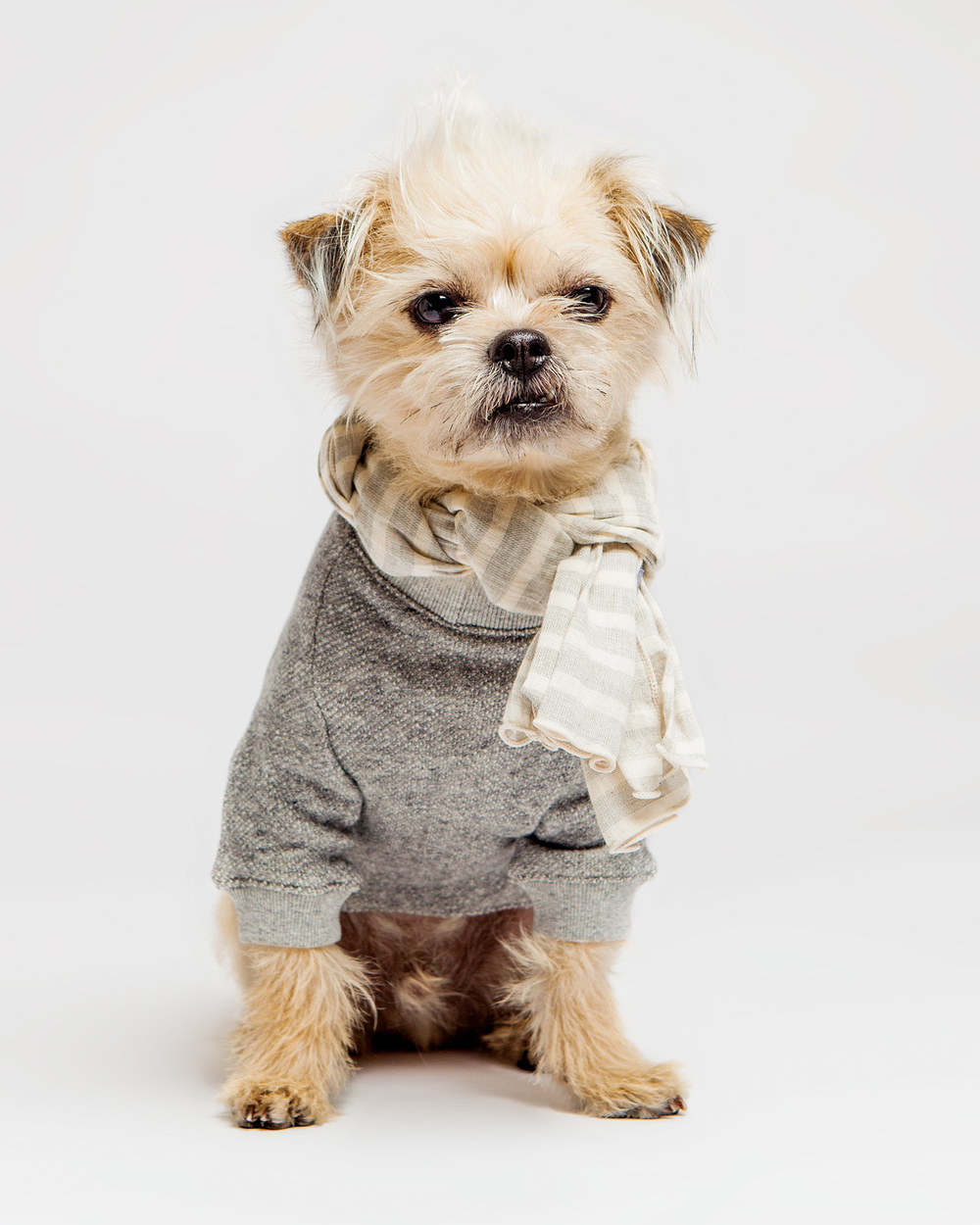 DOG & CO. | Crew Neck Sweatshirt in Vintage Grey