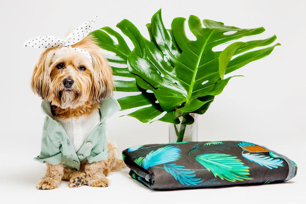 DOG & CO. | Summer Style