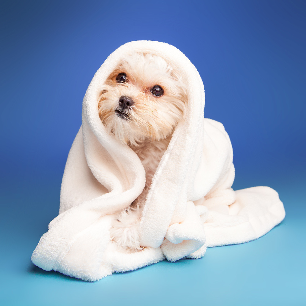 DOG & CO. | Canine Cotton Terry Towel