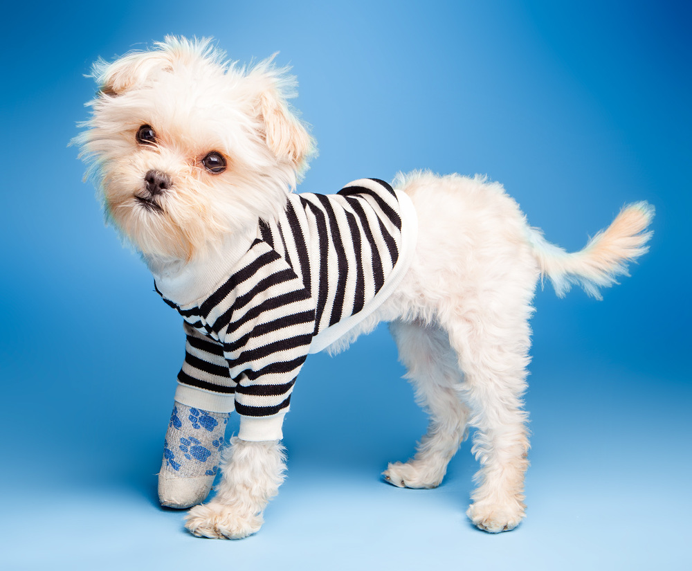 DOG & CO. | Cheeky Striped Pullover