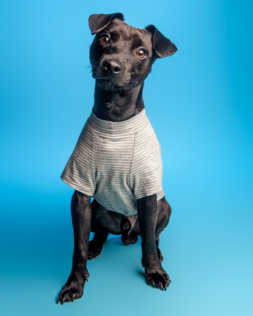 DOG & CO. | Perfect T in Grey Stripe