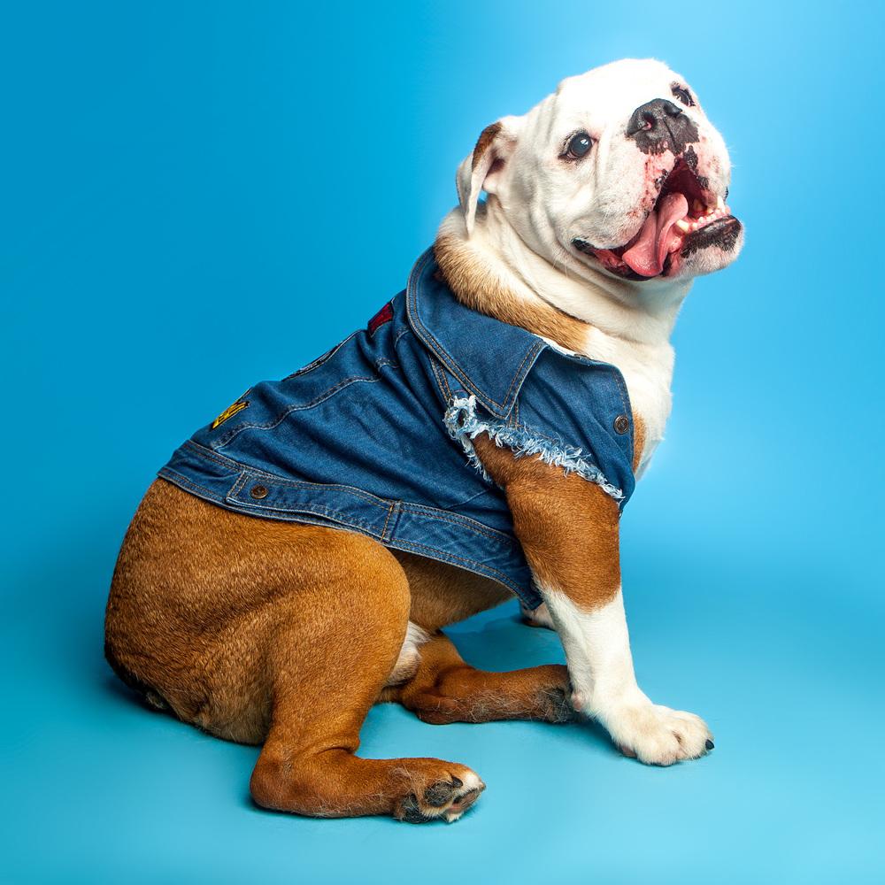 PET HAUS | Denim Battle Jacket with Patches