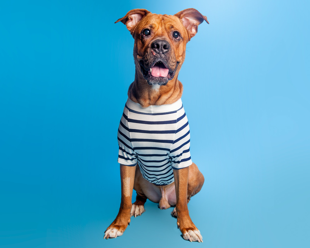 DOG & CO. | Perfect T in Navy + White Stripe