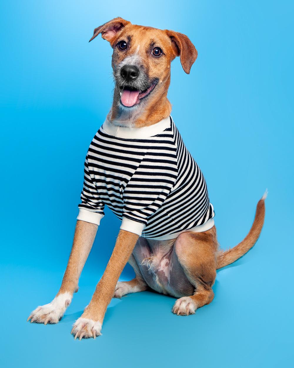 DOG & CO. | Cheeky Stripe Pullover in Black + White Stripe